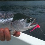 Port Alberni Sockeye Report – June 8, 2011