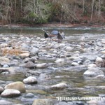 Stamp River Coho and Chinook – Fishing Report