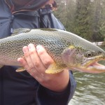 Upper Stamp River Fishing Report – Nov. 22, 2011